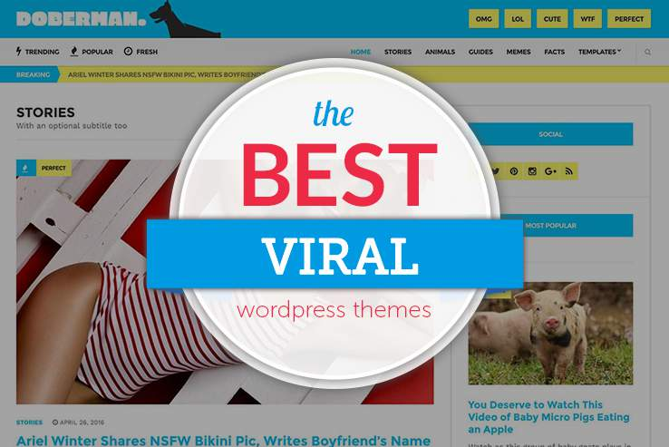 Viral WordPress Themes