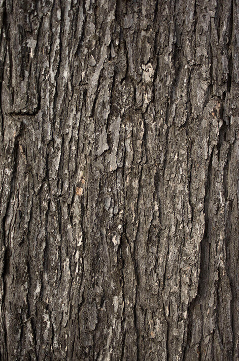 rsz_free_nature_backgrounds_tree_bark_by_unrestrictedstockcom1