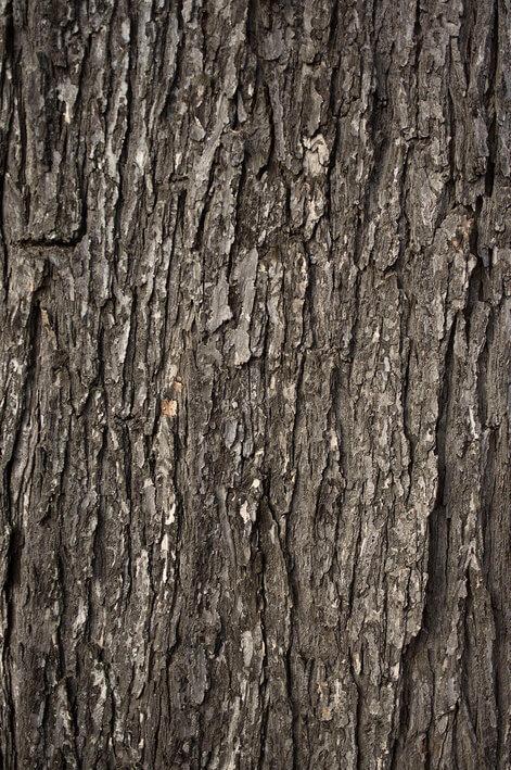 """""""自然"""",用在一个不能进入的红树和红树的自动压门"""