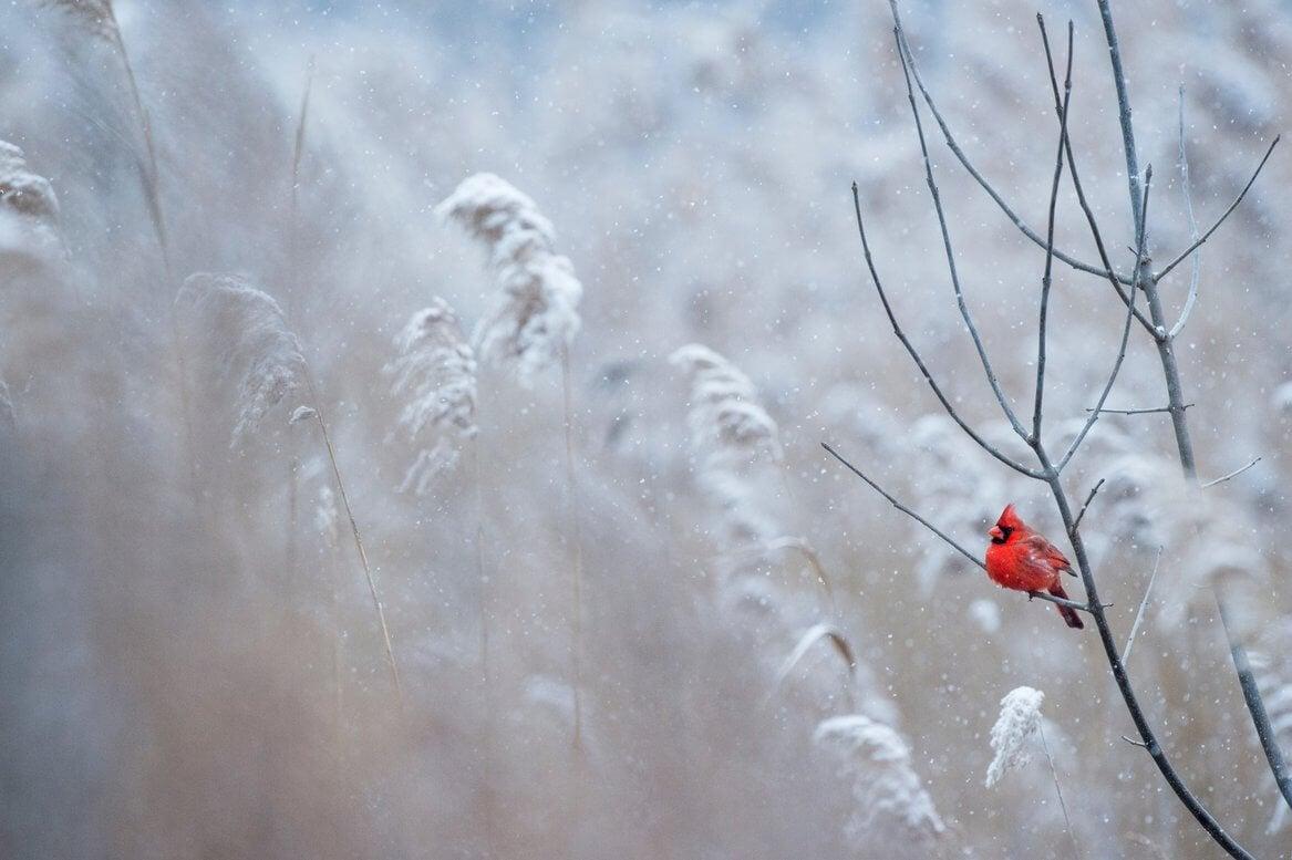 """""""自然""""的脉谱和————————————红十字的红霉素"""