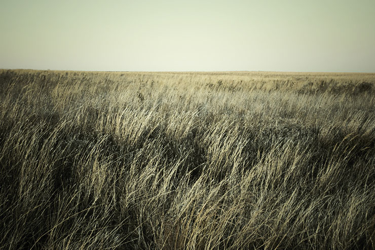 Free Stock Photography - Prairie No. 3